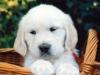 sweet_pup